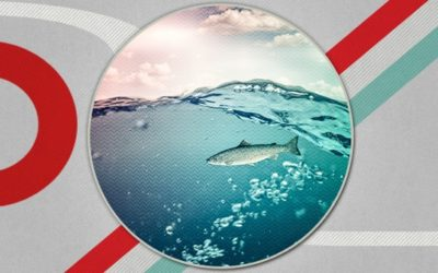 141 strategische Contentplanung mit dem FISH-Modell