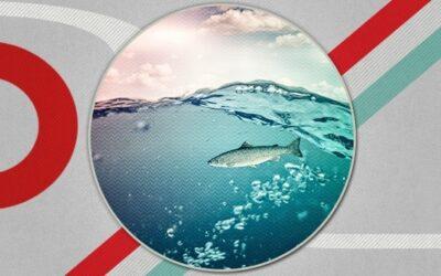 TAT0141 – strategische Contentplanung mit dem FISH-Modell